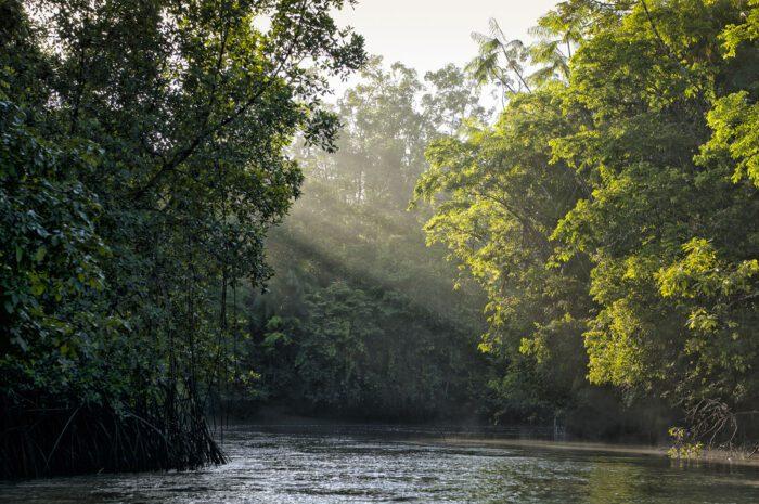Fórum Amazônia Sustentável retoma as atividades