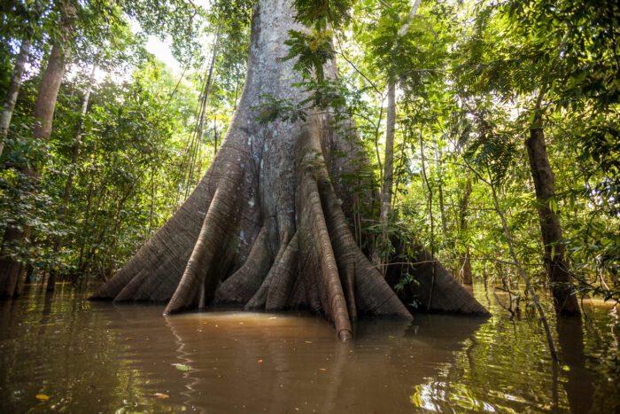 Amazônia 4.0