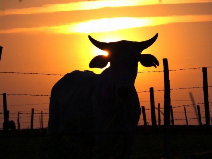 Amazônia Possível: Coalizão Brasil foca em rastreabilidade da carne