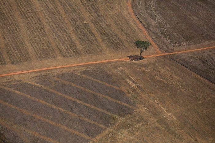 Coalizão Brasil envia ao governo propostas para conter desmatamento na Amazônia